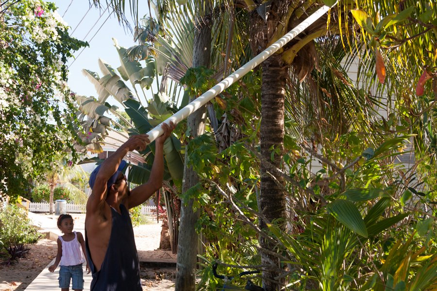 Helping Dad get a coconut, dumb lady.